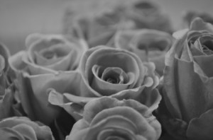 rose_black_and_white_201853