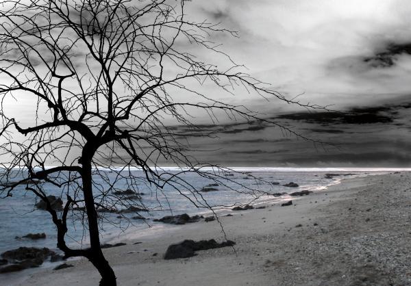 nature--sad-tree-munir-alawi[1]
