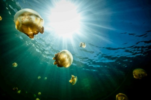 the-girl-at-jellyfish-lake-by13277[1]